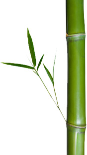 Presentation Zen Be Like The Bamboo 7 Lessons From The Japanese Forest